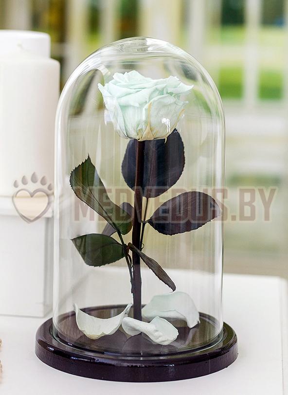 Роза в колбе 28 см, Mint Elegant