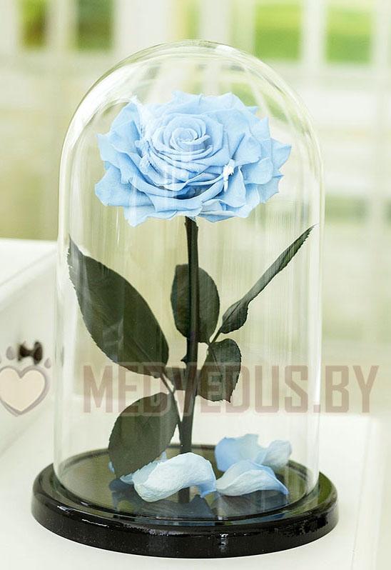 Голубая роза в колбе 28 см, Baby Blue King