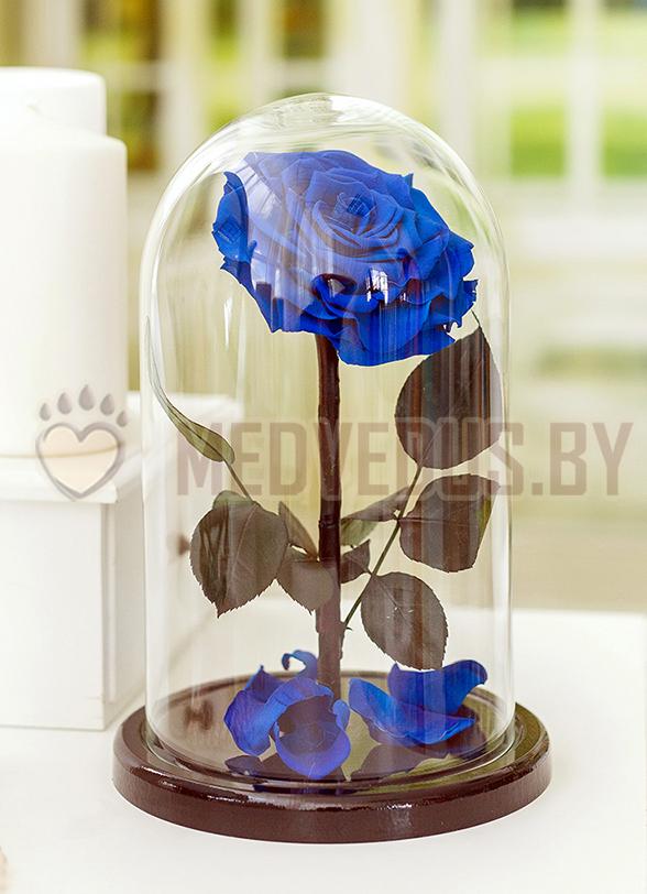 Синяя роза в колбе 28 см, Royal Blue King