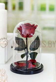 Бордовая роза в колбе 22 см, Maroon Mini