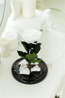 Белая вечная роза в колбе 28 см, White Pearl Premium