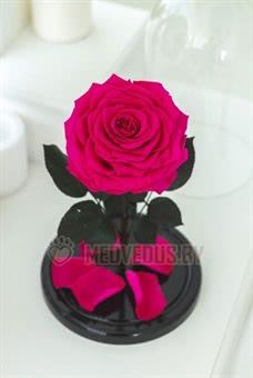 Ярко-розовая роза в колбе 28 см, Magenta King