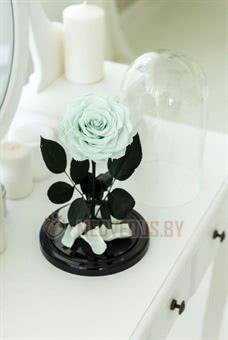 Ментоловая роза в колбе 28 см, Mint King