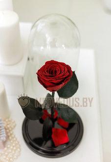 Бордовая роза в колбе 28 см, Maroon Elegant