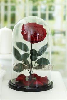 Бордовая роза в колбе 32 см, Maroon Vip