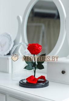 Роза в колбе 22 см, Romantic Red Min