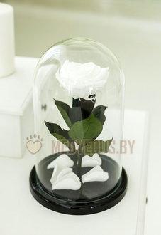 Белая роза в колбе 28 см, White Pearl Elegant