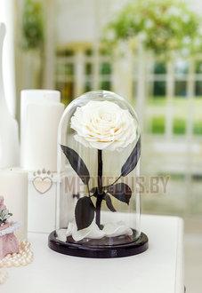 Белая роза в колбе 28 см, White Pearl King