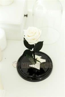 Белая роза в колбе 22 см, White Pearl Minii