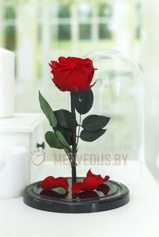Алая вечная роза в колбе 28 см, Maroon Premium