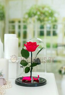 Ярко-розовая роза в колбе 28 см, Magenta Elegant