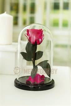 Розовая роза в колбе 22 см, Magenta Mini