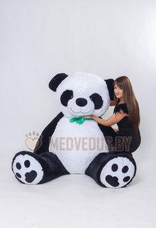 Панда Чика 240 см с лентой