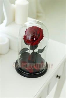 Бордовая роза в колбе 28 см, Maroon King