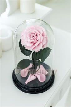 Нежно-розовая роза в колбе 28 см, Pretty Pink King