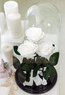 Композиция из роз в колбе 37 см, Trio White Pearl