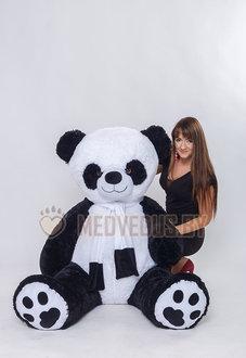 Плюшевая панда Чика 180 см