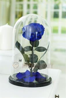 Синяя роза в колбе 32 см, Royal Blue Vip