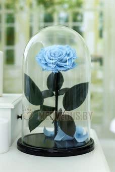 Голубая роза в колбе 32 см, Baby Blue Vip