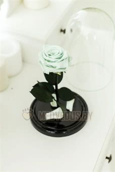 Ментоловая роза в колбе 22 см, Mint Mini