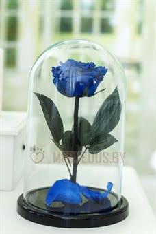 Синяя Роза в колбе 28 см, Royal Blue Premium